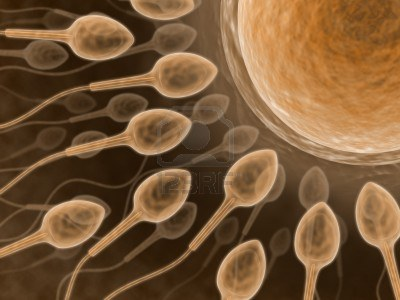 1454878-sperm-close-up-fecundation-of-the-spermatozoid-with-an-ovum