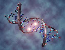 Carga genética