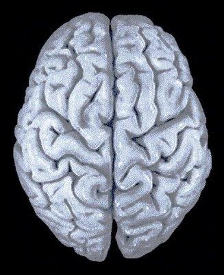 cerebro_humano