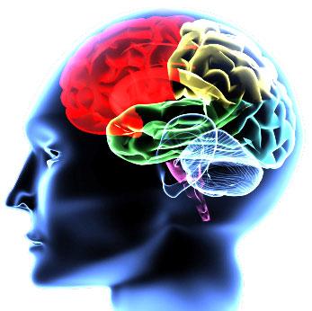 brain01_1_