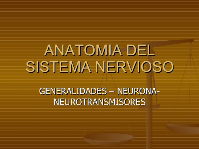 sistema-nervioso-central-neuronadr-campos-1209492982665775-8-thumbnail-4