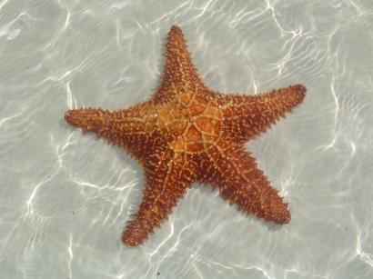 cuba-estrella-de-mar
