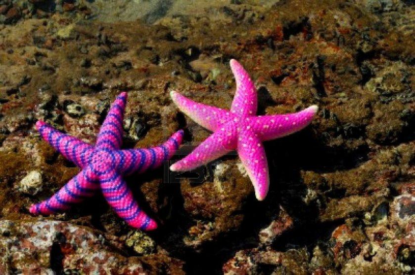estrella-de-mar-en-la-costa-de-arrecife