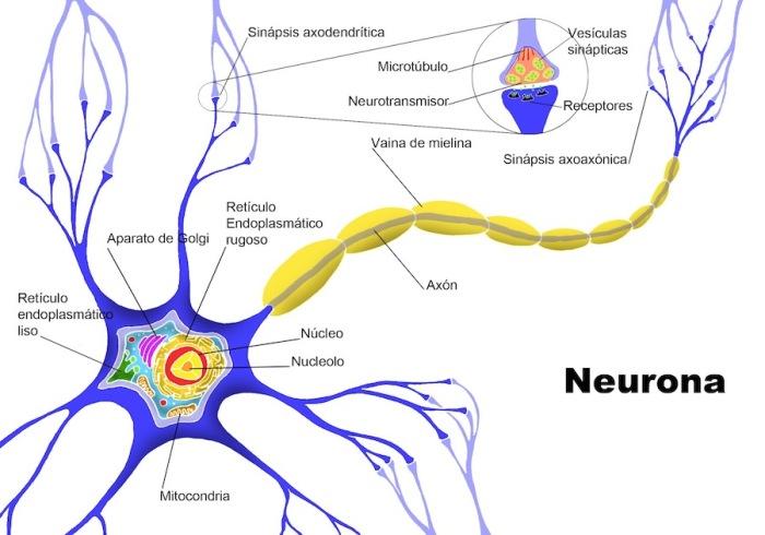 Consejos-para-prevenir-la-degeneración-de-las-neuronas
