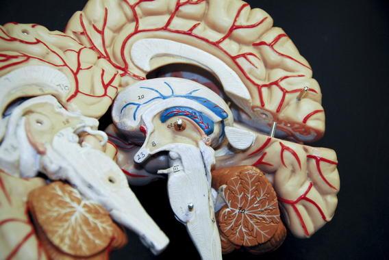 Descifran-el-codigo-genomico-de-la-forma-mas-comun-de-cancer-cerebral-infantil_image_380